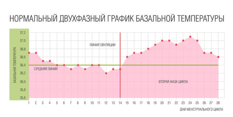 признаки овуляции - базальная температура