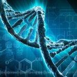 Генетическая совместимость супругов